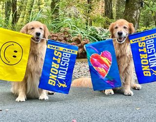 Therapy Dog a Big Hit at the 2021 Boston Marathon