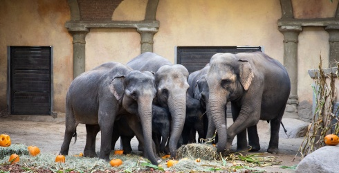 Unscramble This Puzzle Before the Elephants Crush All the Pumpkins