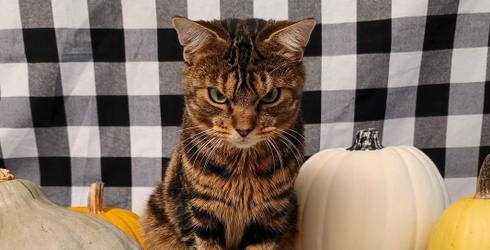 Giggles the Angry Cat Wants 2020 to Know He's None Too Pleased With Its Performance