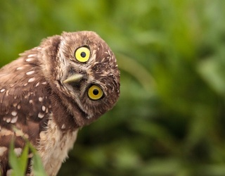 Friday Funnies: Hoo Needs a Laugh?
