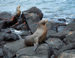 How to Spend a Day in the Galapagos Without Leaving Your House