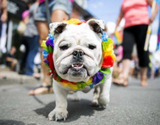Literally Just 15 Photos of Dogs Celebrating Pride Month and Living Their Best Lives