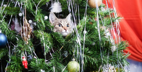 7 Cats Who Aren't Sorry They Took Over Your Christmas Tree