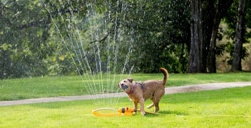 """Does it """"Puzzle"""" You How Much Dogs Love Playing With Sprinklers?"""