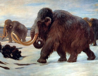The Mammoth's Genes Were So Messed up Before Extinction, the Animal Probably Couldn't Smell