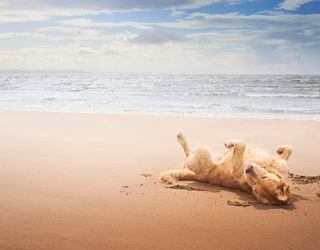 Unscramble This Sandy Dog Day Afternoon Puzzle
