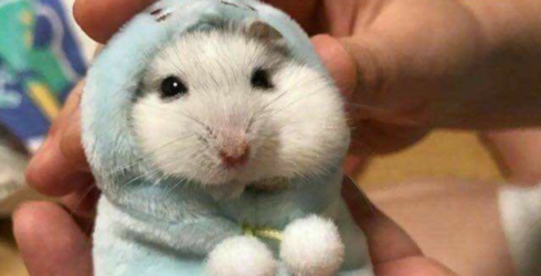 Blue Monday is Not a Real Thing, But Animals Doing Weirdly Cute Things Are