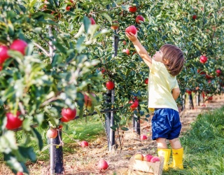 It's High Time to Head Into the Apple Orchard With This Puzzle