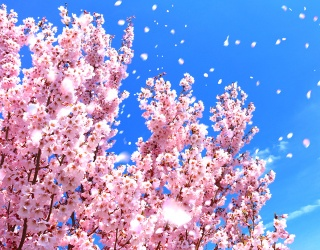 Usher in the First Day of Spring With This Blooming Cherry Tree Puzzle