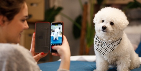 We'll Be Scrolling Through This Thread of Pet Photos All Day