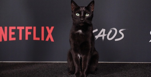 """""""Salem"""" the Cat Walked the Red Carpet in a Display of Utter Sophistication"""