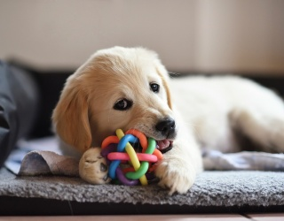 Nothing Helps Your Brain Break out of Weekend Mode Like a Puppy Puzzle