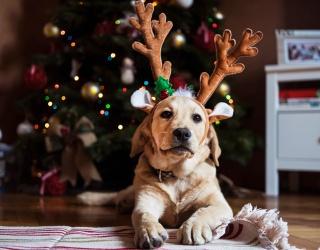 Bork, Bork! Unscramble This Good Boi Christmas Puzzle