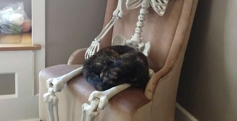 This Cat Became Best Friends With a Skeleton, Proving Animals Celebrate Halloween Too