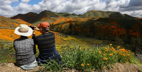 Travel Tuesday: Flower Chasing Is the New Leaf Peeping