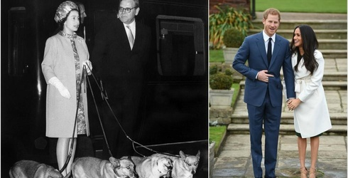 The Queen's Murderous Corgis Like Meghan Markle, Obviously That Makes Her a Keeper