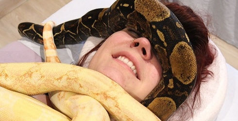 Snake Massages Are the Spa Treatment We Never Asked For