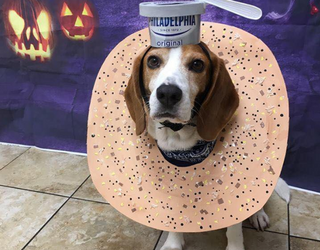 The Week in Tweets: I'll Have an Everything Beagle With Cream Cheese, Please
