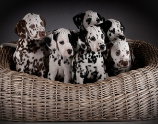 Who Doesn't Need a Bunch of Puppies in a Basket on Their Wednesday?
