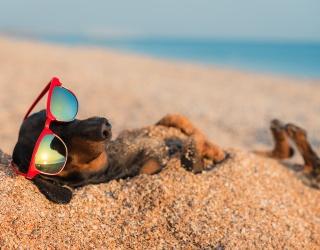 Hot Dog! Match All of These Summer-Lovin' Dachshund Photos