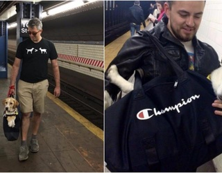 Dogs Must Be in a Bag to Ride the NYC Subway, Pet Owners Rise to the Challenge