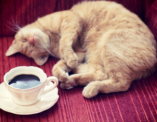 Travel Tuesday: Where to Find Animal Cafes for Cups of Cuddles