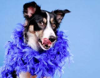 Twitter's Best Dressed Take Their Places on National Dress up Your Pet Day