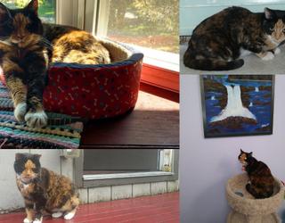#PetStats: Aloha, Honu Princess Le'alani!