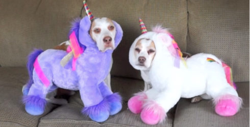 Two Dogs Unwillingly Try On 17 Costumes, Win Halloween