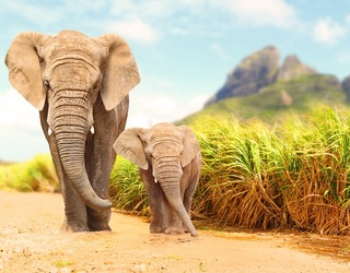 It's World Elephant Day! What Do You Know About These Gentle Giants?