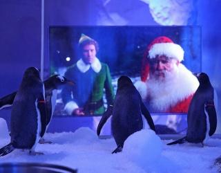 Penguins at London Aquarium Have a Favorite Christmas Movie
