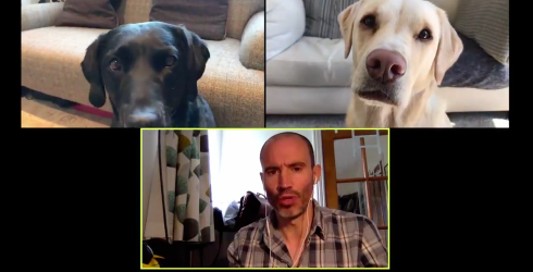 Man's Company Call With His Dogs Helps Us See the Hilarity of Working From Home