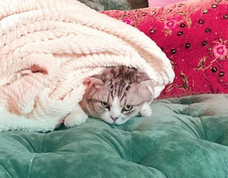 These 7 Pets Are Richer Than I'll Ever Be