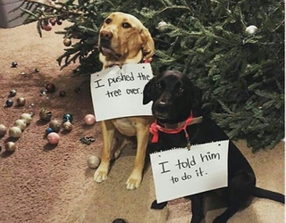 """Friday Funnies: Looks Like We Have a Case of the Holiday """"Who Dunnit?"""""""