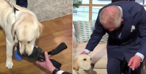 Digby the Dog Meets Prince Charles, Would Rather Play With an Expensive  Microphone