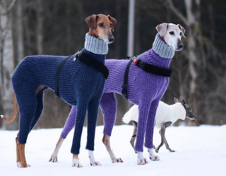 Friday Funnies: Greyhound Body Sweaters We Never Asked For