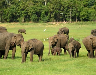 This Week's Great GIF Rundown: Whales, Puppies & Elephants