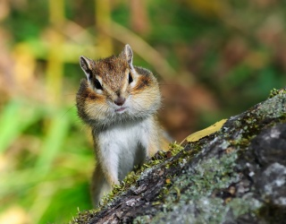 A Food Writer Has Been Passing Time in Quarantine by Wining and Dining a Chipmunk