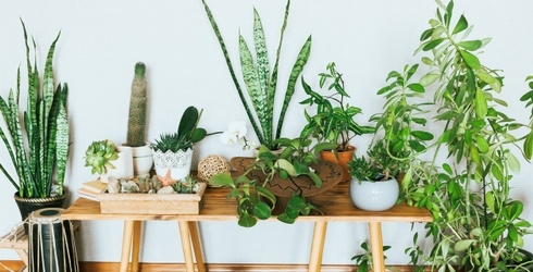 Take This Quiz and We'll Help You Become the Best Plant Parent You Can Be