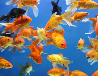 Dubai Wants to Feed You to the (Virtual) Fish With Its Newest Airport Security Feature