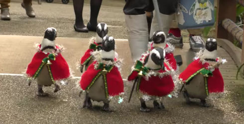 Just Some Penguins Dressed up as Santa and Going for a Stroll in Japan, NBD