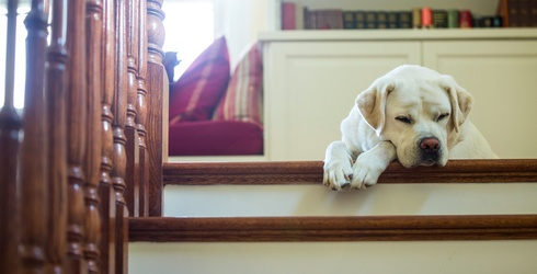 Literally Just a Bunch of Dogs Trying to Walk up Stairs to Help You Through This Hump Day