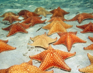 Shoot for the Stars to Solve This Starfish Puzzle