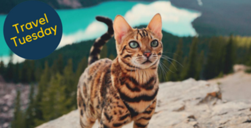 Suki the Traveling Cat Is Living the Life Most of Us Can Only Dream Of