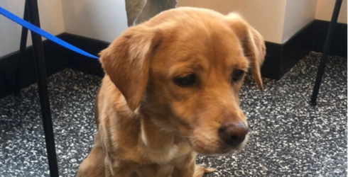 Stray Senior Dog Wanders Into Forever Home by Accident