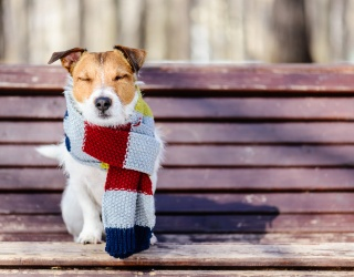 Channel the Energy of the Bundled-up Pup in This Puzzle to Start the Day off Right