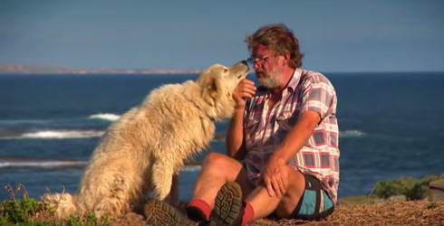Oddball the Penguin-Protecting Dog Dies, Leaves Behind Quite a Legacy