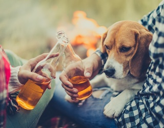 There's a New Dog Tap Room Opening, so You Can Finally Enjoy a Pint with Some Adoptable Pooches