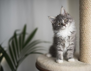 Adopt a Kitten and We'll Show You How to Completely Spoil It