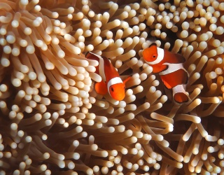 Say Hi to Nemo When You Solve This Anemone-mone Puzzle